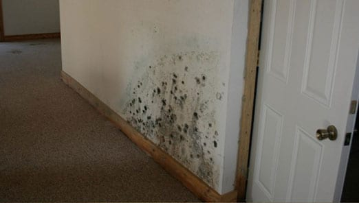 Mold inspections Tampa